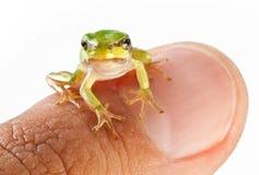 手指青蛙小人 库存照片