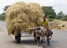 驴手推车,东非大裂谷,埃塞俄比亚,非洲 免版税库存图片