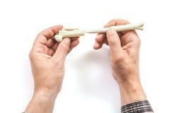手插入原始的把柄以骨头的形式在盖帽的 免版税库存图片