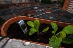 手机棍子出于在一个罐的地面在阳台的花 免版税库存照片