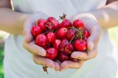 手极少数的年轻白种人妇女女孩举行有机新近地被采摘的甜樱桃在庭院里 绿草在背景中 免版税库存照片