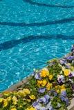 手段游泳池和花 库存照片