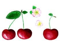 手淹没水彩樱桃花和莓果 库存例证