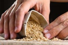 手用在亚麻制大袋的糙米 免版税库存照片