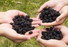手用黑莓 库存照片