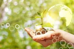 手用绿色新芽和地球 免版税库存照片