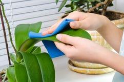手由湿海绵的清洁植物 库存图片