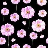 手画与花银莲花属的水彩无缝的样式在黑背景 免版税库存照片