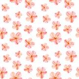 手画水彩无缝的样式用红色冬葵开花在白色背景的白麻 库存图片