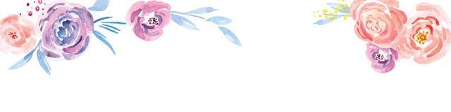 手画水彩花卉玫瑰色样式 库存图片