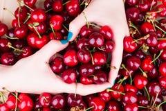 从手的心脏在樱桃背景  库存照片