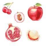 手黎明设置了用水彩果子,新鲜食品 图库摄影