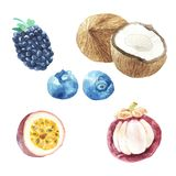 手黎明设置了用水彩果子,新鲜食品 库存图片