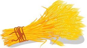 手画动画片束在白色背景的麦子 免版税库存照片