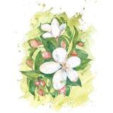 手画水彩花 向量例证