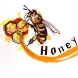 手画详细的蜂充分地坐梳子蜂蜜natur 皇族释放例证