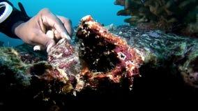 手od水下珊瑚深的海底轻潜水员接触  股票视频