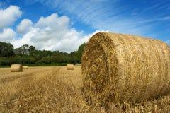 打包新鲜的干草 免版税图库摄影