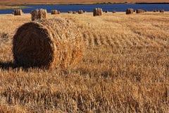 打包麦地秸杆 库存照片