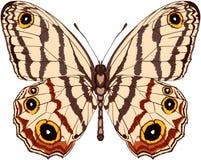 打印的传染媒介美好的蝴蝶例证 向量例证