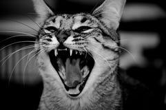 打呵欠的猫(B&W) 免版税库存图片