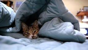 打呵欠逗人喜爱的猫 股票录像