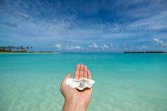 打开与一颗珍珠的壳在热带海滩在妇女的手上 库存照片