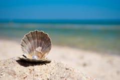 打开与珍珠谎言的灰色壳在蓝色海和蓝天暑假背景的沙子  图库摄影