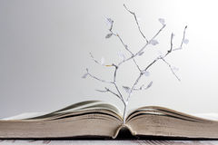 打开书和纸信件树概念 库存图片