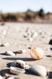 打开在海滩的壳 库存图片