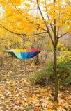 打开在黄色槭树的伞 库存照片
