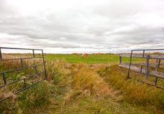 打开对与干草的领域 库存图片
