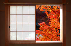 打开日本可调整窗口和明亮的红色秋天槭树叶子 免版税库存图片
