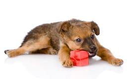 打开礼物的小狗尝试 背景查出的白色 库存照片