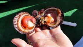 打开蛤蜊的壳与里面珍珠的 库存照片