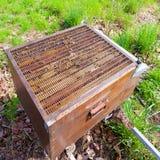 打开蜂房,养蜂业 免版税库存照片