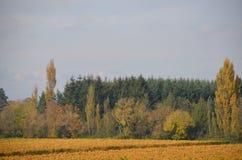 打开领域和树在俄勒冈` s Willamette谷 免版税库存图片