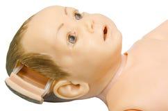 打开婴孩解剖学部分头  学生螺柱的训练模型 免版税库存照片