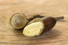 打开jatoba果子和种子- seecourbaril或巴西古柏 免版税库存图片