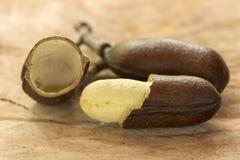 打开jatoba果子和种子- seecourbaril或巴西古柏 免版税图库摄影