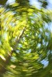 打旋的产树胶之树 免版税库存照片