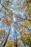打旋的秋季山毛榉树机盖在森林里 免版税库存照片