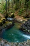 打旋的水在森林里 库存图片