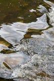 打旋,一条快速流动的河的反射性表面 免版税库存图片