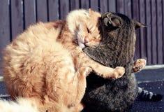 打比赛的两只猫 免版税库存照片
