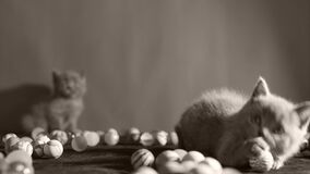 打球的小猫 股票视频