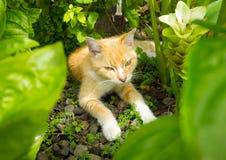 打盹在热带植物之间的猫在加勒比 免版税图库摄影