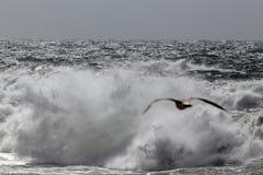 打破在海岸的风雨如磐的波浪 免版税图库摄影