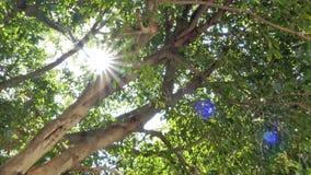 打破树的光芒四射的阳光 股票录像