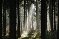 打破树的太阳光芒 库存照片